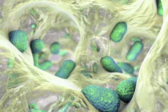 Biofilm of bacterium Acinetobacter baumannii, 3D illustration. Acinetobacter is antibiotic resistant rod-shaped bacterium which causes hospital-acquired infections (Forrás: 123rf.com)