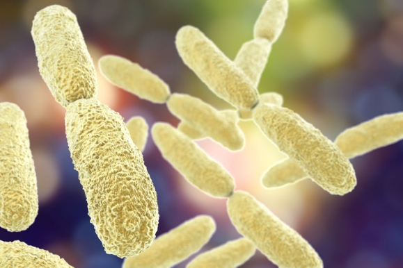 Bacteria Klebsiella, 3D illustration. Gram-negative rod-shaped bacteria which are often nosocomial antibiotic resistant (Forrás: 123rf)